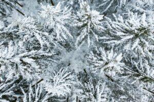 Winter, Bäume, Schnee, Tannen,