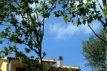 Blick durch die Äste eines Ahornbaumes auf das Dach eines mediterranen Gebäudes und in den blauen Himmel.