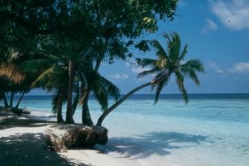 Palmen und weißer Sand vor türkisblauem Meer.