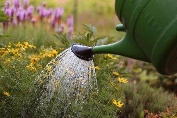 Bildausschnitt: mit einer großen grünen Gießkanne werden verschiedene Pflanzen und Blumen gegossen