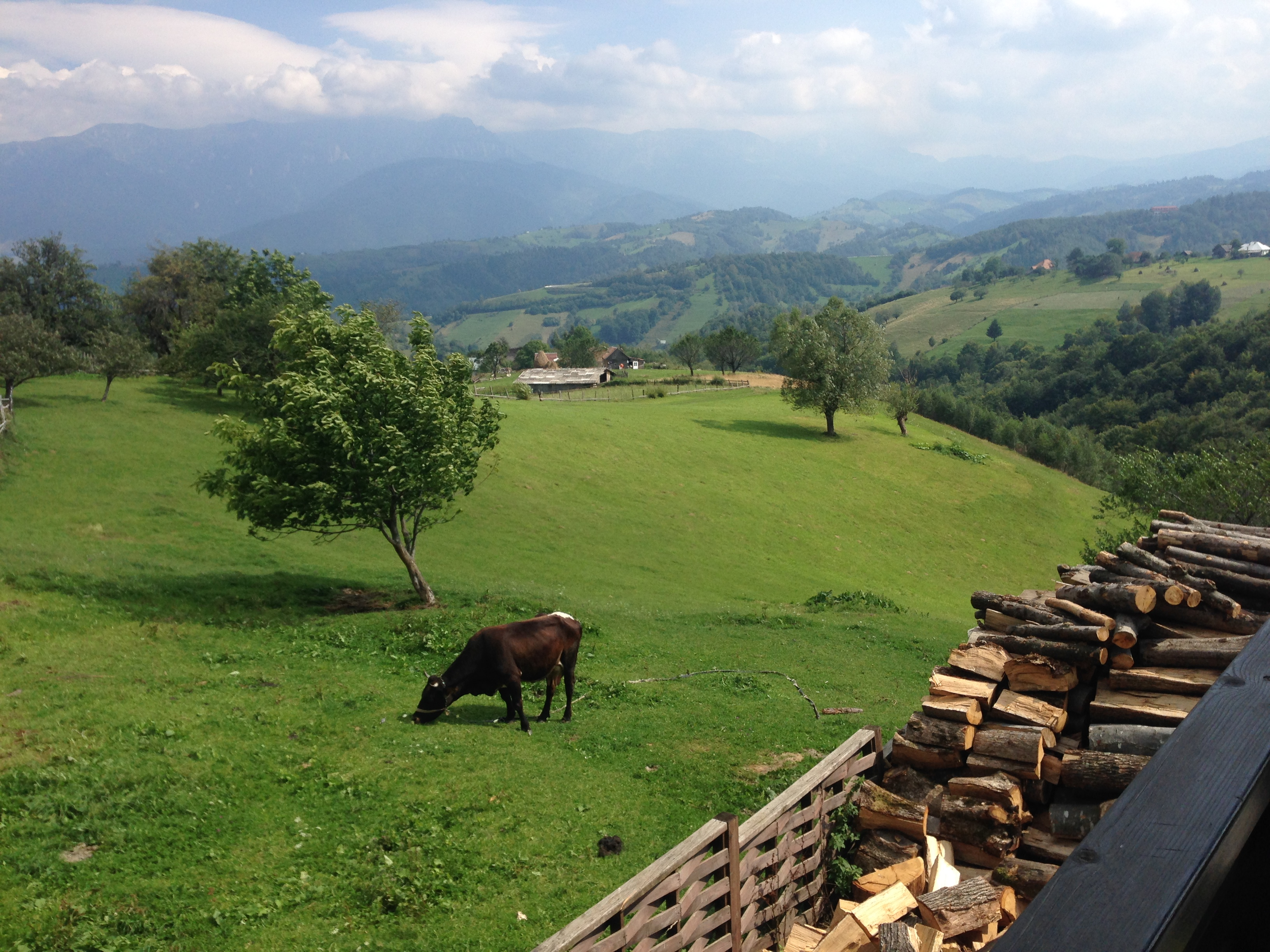 Blick über eine Wiese auf die hügelige Landschaft der rumänischen Kaparten