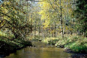 Blick auf einen natürlichen Bach, der durch einen Wald verläuft